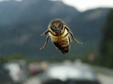 Fahrtipps bei Insekt an Bord: Ruhe bewahren