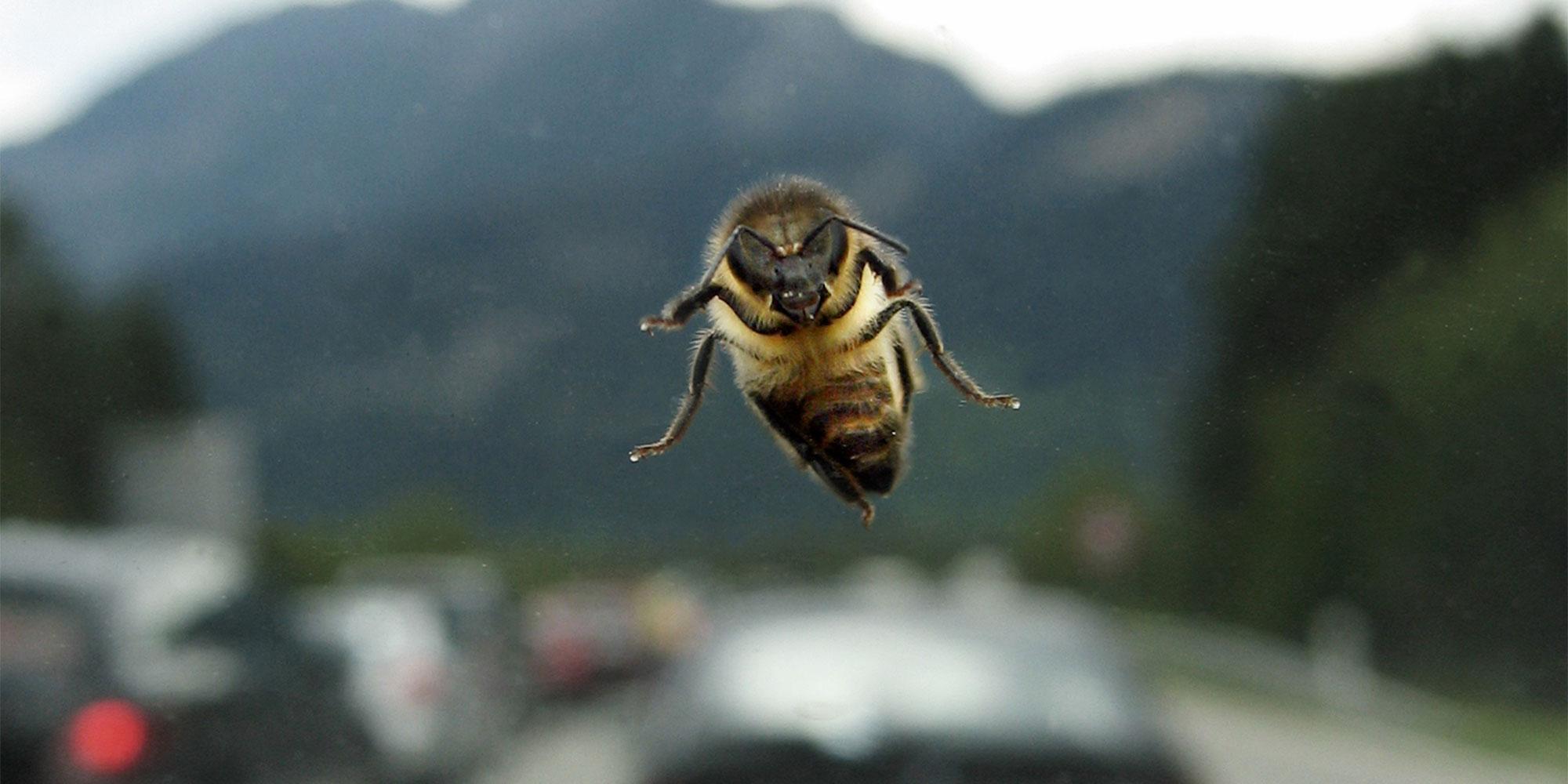 Wespe, Biene & Co. im Auto: Immer locker bleiben