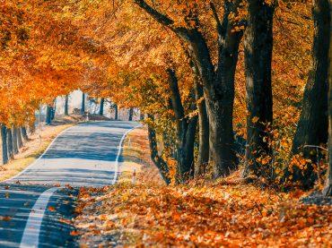 Achtung, Autofahrer: So kommen Sie sicher durch den Herbst
