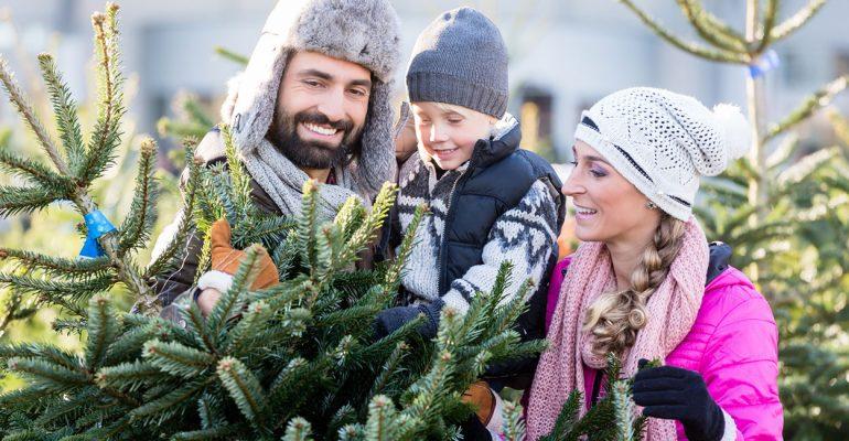 Oh Tannenbaum: Tipps zum Weihnachtsbaumkauf