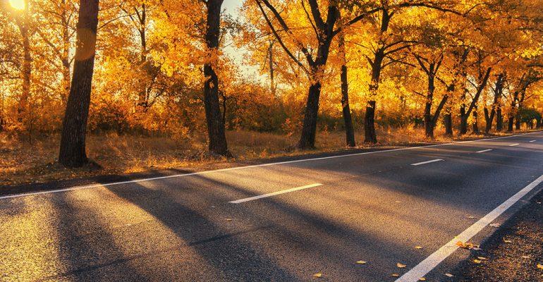 Vorsicht vor Laub! So fahren Sie sicher durch den Herbst