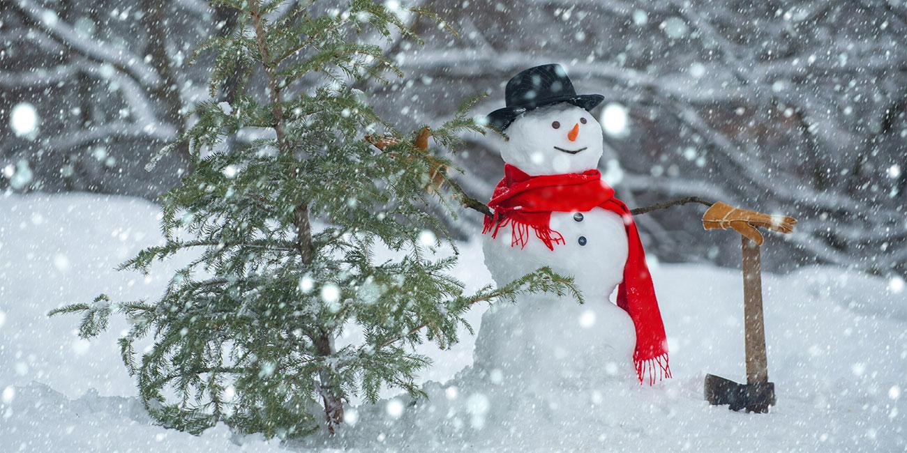 Weihnachtsbaum selber schlagen – ein Spaß für die ganze Familie